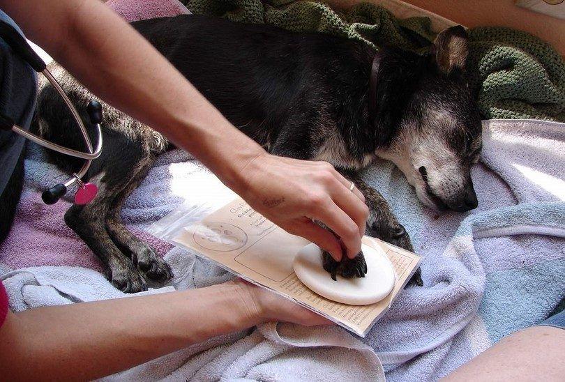 La eutanasia de un perro en casa: un paso pacífico