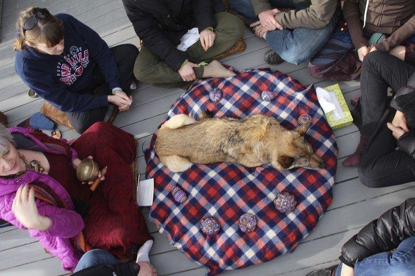 Viejo y perro enfermo último momento con la familia