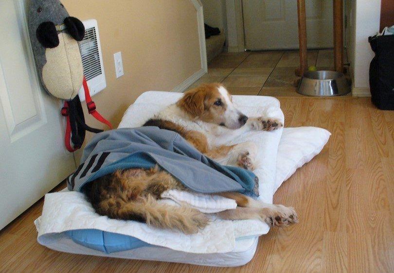 Perro viejo en espera de la eutanasia