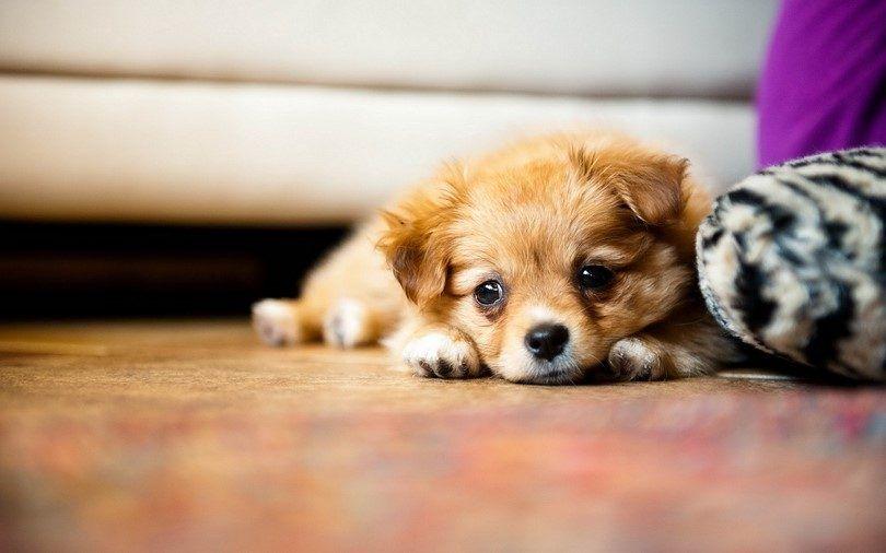 Obtener un nuevo pequeño perrito lindo perro;