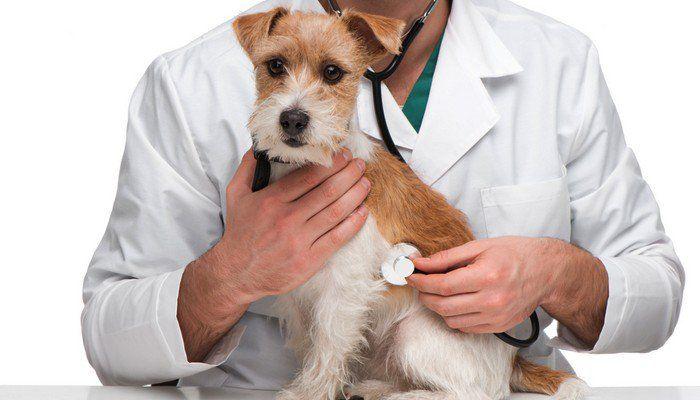 Basada en la Evidencia Medicina Veterinaria vs holГstico Medicina Veterinaria