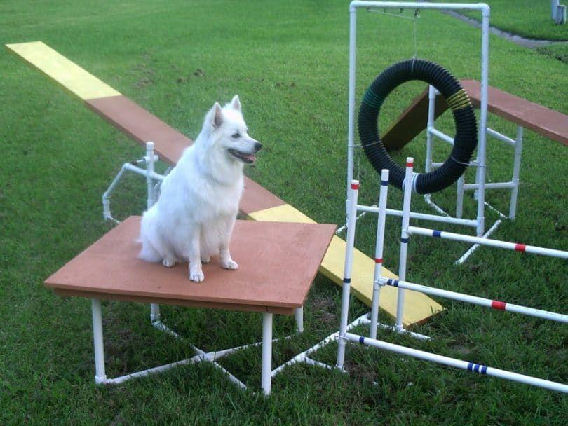 Construcción Equipo perro de la agilidad