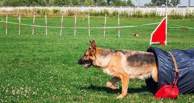 Ejercicio: desafiar a su perro fГsicamente
