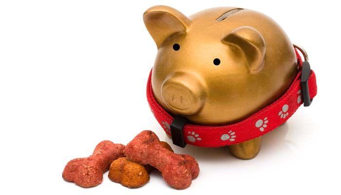 Costosas marcas de alimentos para perros Вїvale la pena el costo