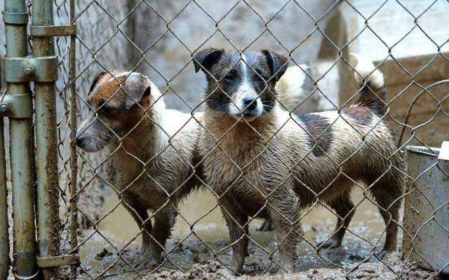 Nueva York famosa del perrito del partido CompaГ±Гa obtiene Supuestamente animales de los molinos del perrito