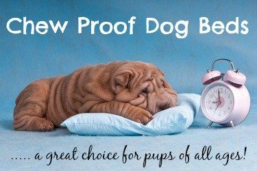 Encuentra la cama del perro chewproof perfecta