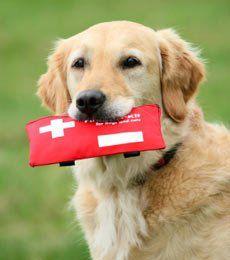 kit de primeros auxilios del perro
