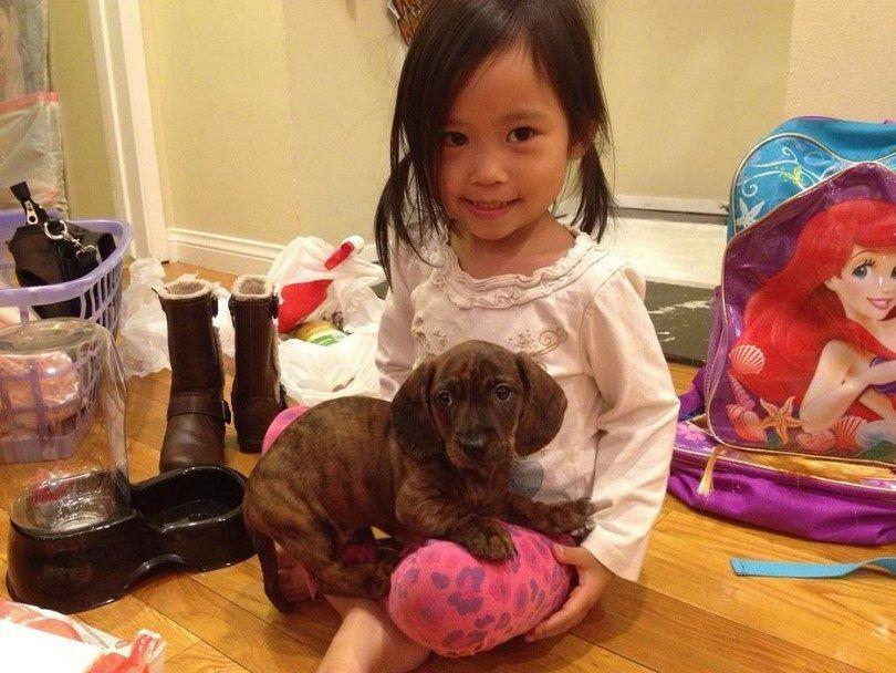 En primer dueño del perro tiempo: guía completa