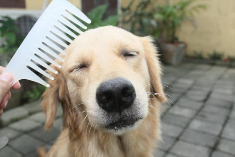El cuidado de su perro