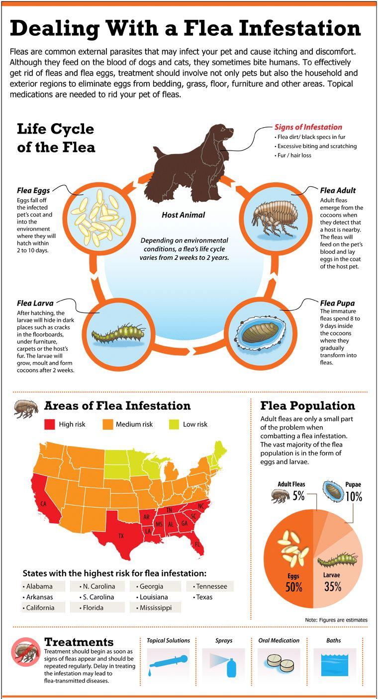El control de pulgas para los perros: causas, tratamiento y eliminación