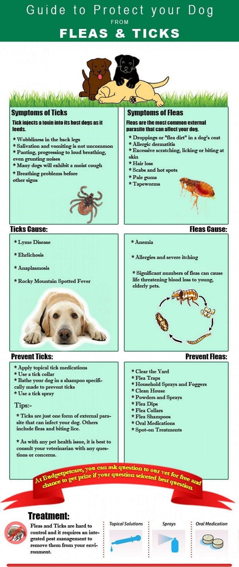 Guía para proteger a su perro de pulgas y garrapatas
