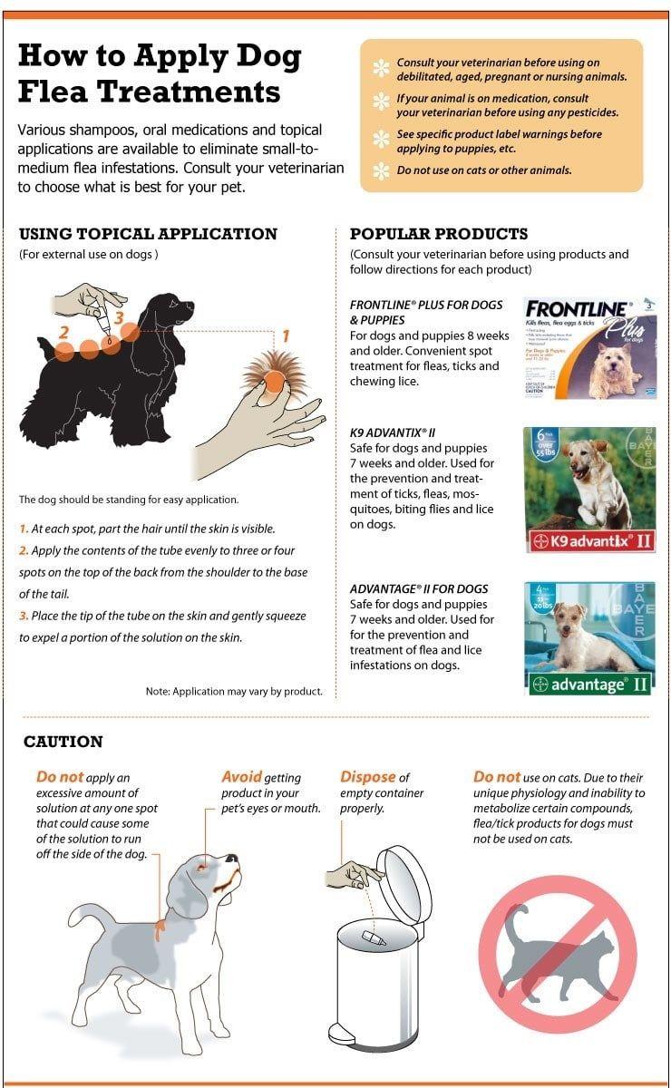 Cómo aplicar los tratamientos de pulgas de perros