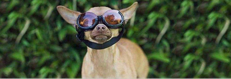 Perro se prepara para un vuelo