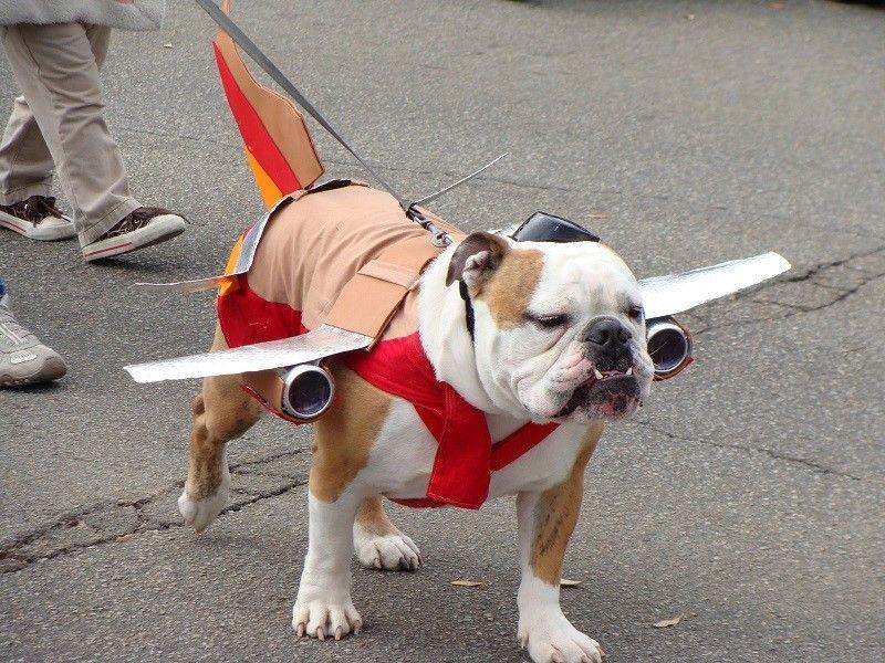 El perro se vistió como un avión