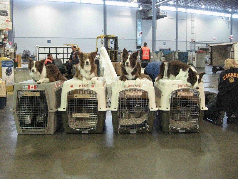Los perros en la carga