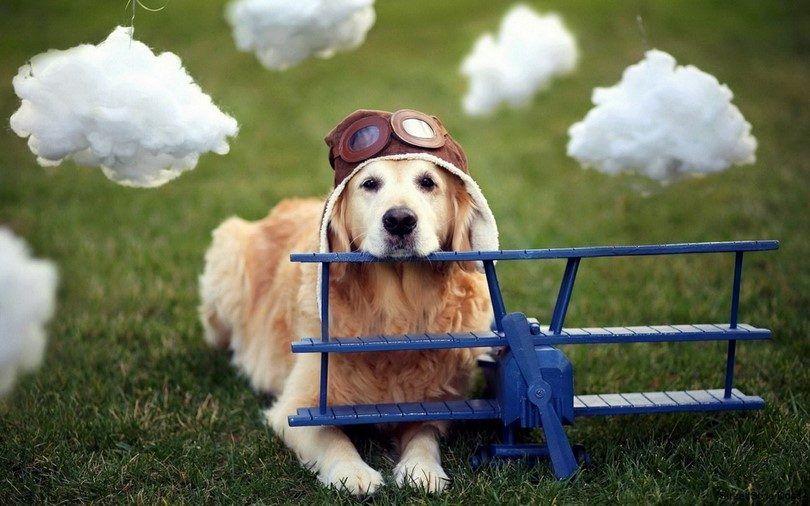 Perro y el avión