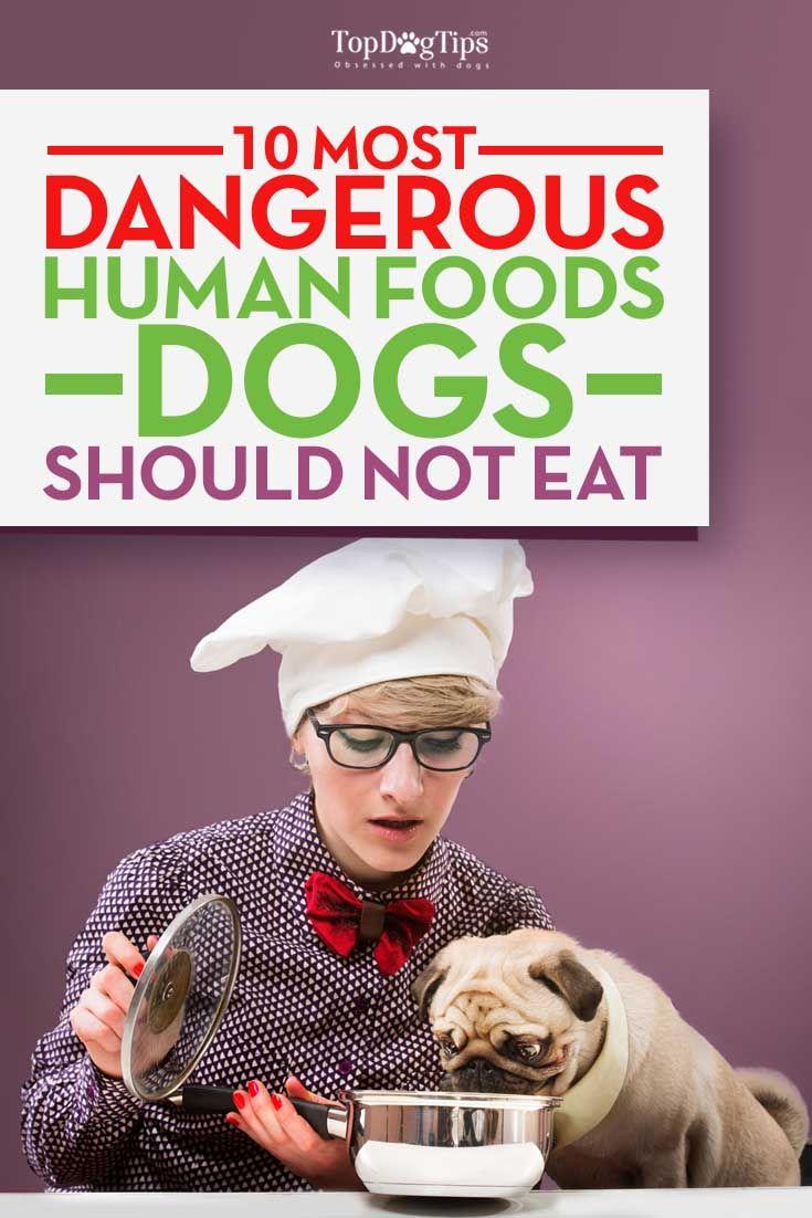Los alimentos humanos que son peligrosos para los perros