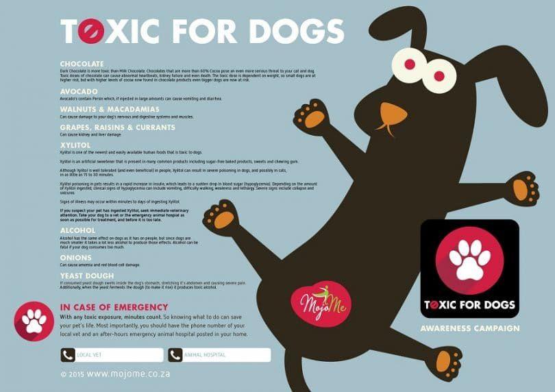 Tóxico para los perros