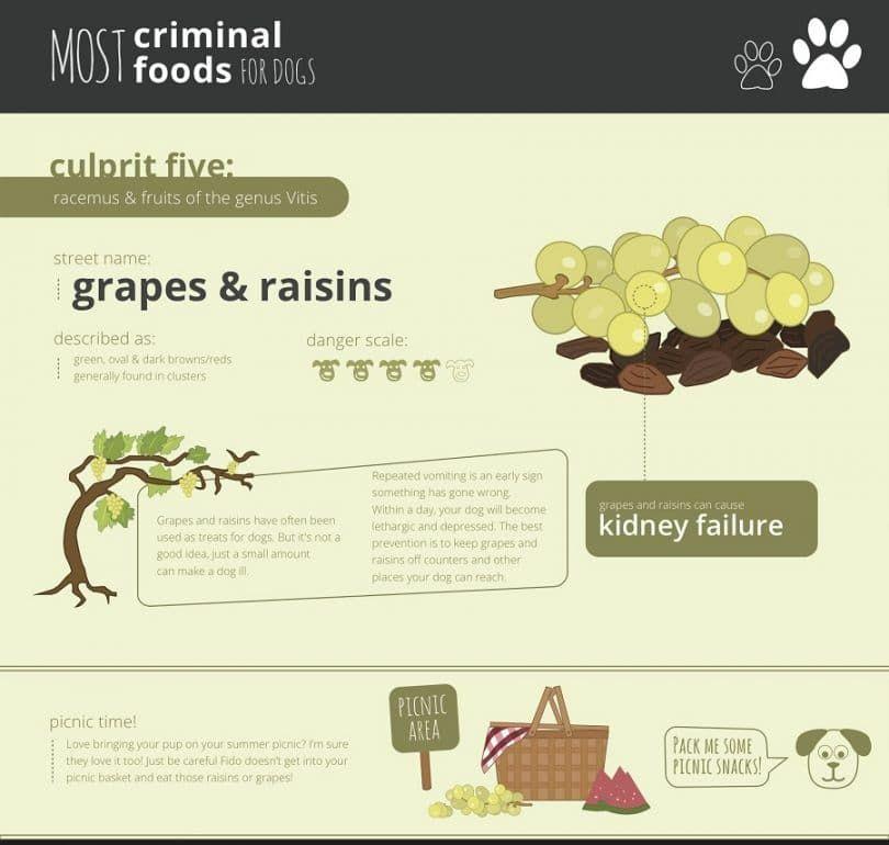 Uvas y pasas