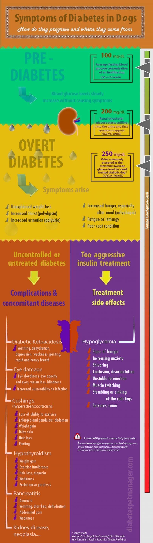Los síntomas de la diabetes en los perros de infografía