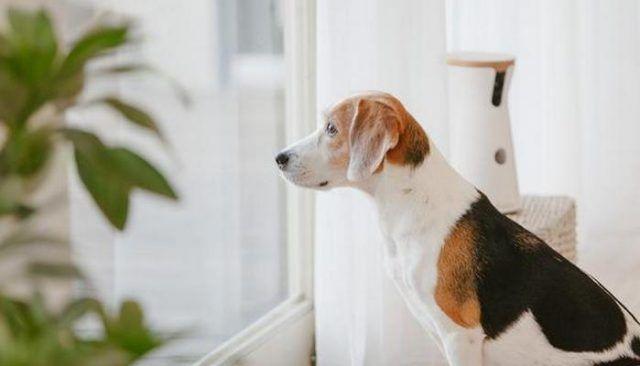 Furbo le permite ver a su perro mientras usted`re At Work
