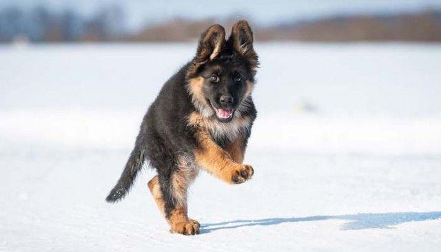 Dotados del perrito ayudarán a combatir el terrorismo en Francia