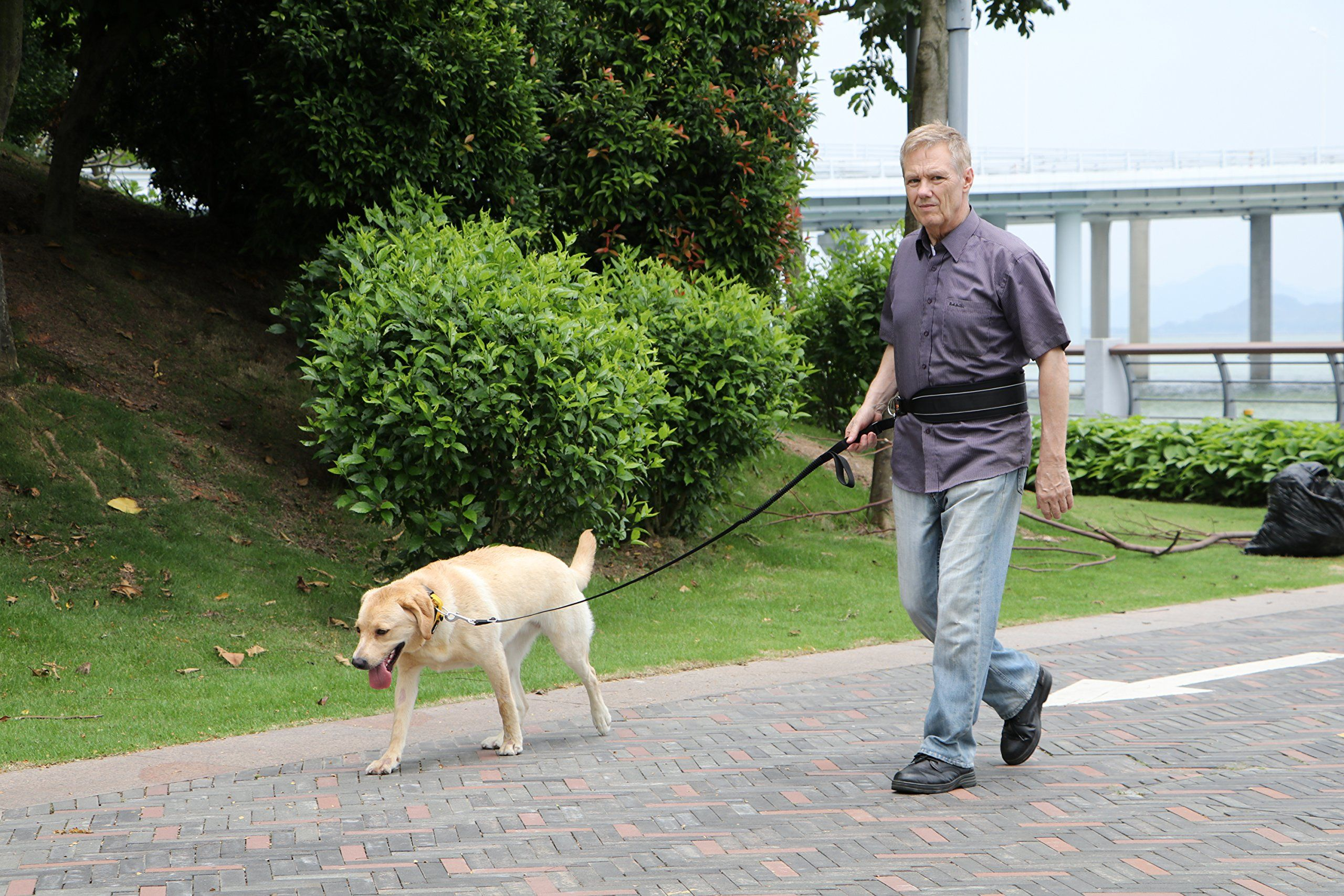 MIU PET EzyDog perro libre de Suministros del sorteo