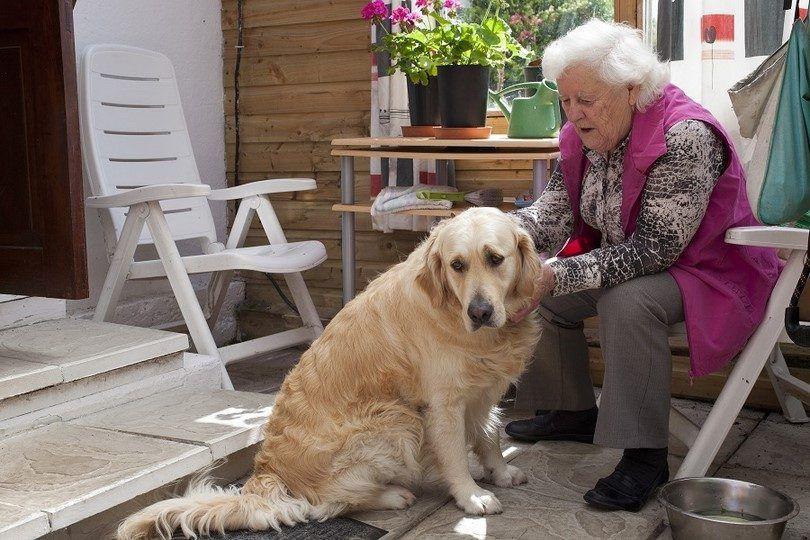 perro adulto con glaucoma leve