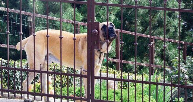 El entrar sin un bocado: cГіmo entrar en el territorio de un perro