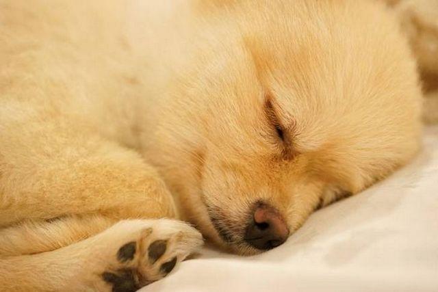 Buen chico, buenas noches: formas de ayudar a los perros del sueño