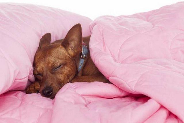 Bueno dogzzzzzz: cómo conseguir un cachorro a dormir toda la noche