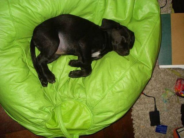 Perro durmiendo posiciones 2