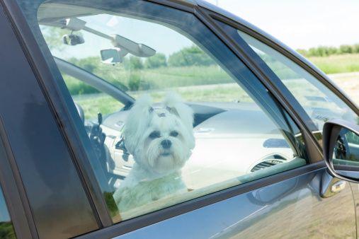 Buenos samaritanos en florida ahora pueden entrar en los coches calientes para salvar perros
