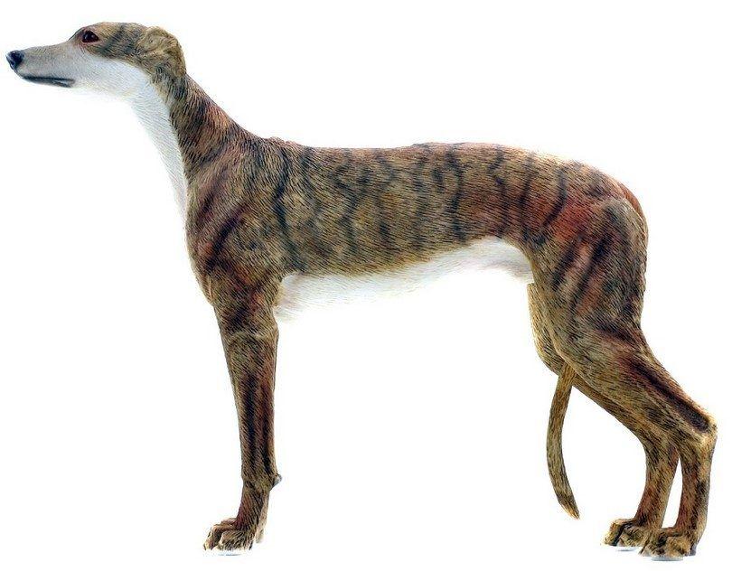 perro galgo