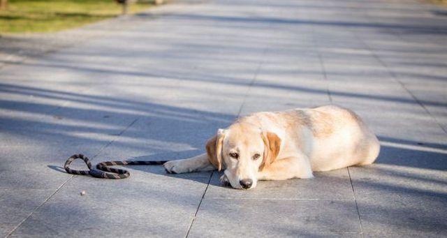 GuГa escuela de perros 7: lo bueno, lo malo y .... Al menos no fea
