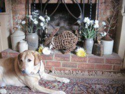 cachorro de su casa a prueba: Un laboratorio amarillo delante de una chimenea llena de adornos