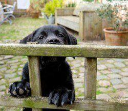 Un cachorro escalar una valla para ilustrar cachorro a prueba de su jardín