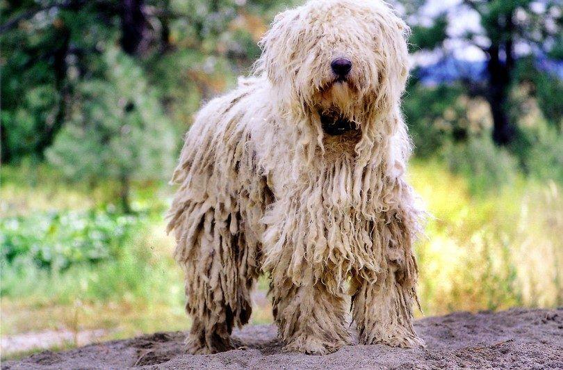 Las bolas de pelo en los perros: cómo hacer frente a este problema como un gato