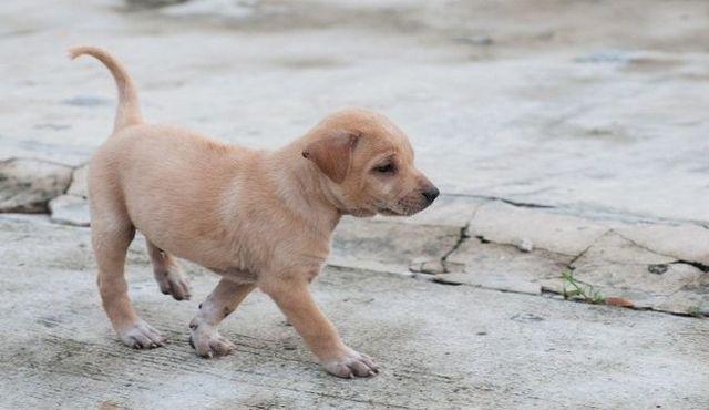 Manejo de una pesadilla: pasos para encontrar su cachorro perdido