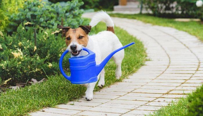 ¿Usted ha considerado Plantar un perro seguro-Jardín