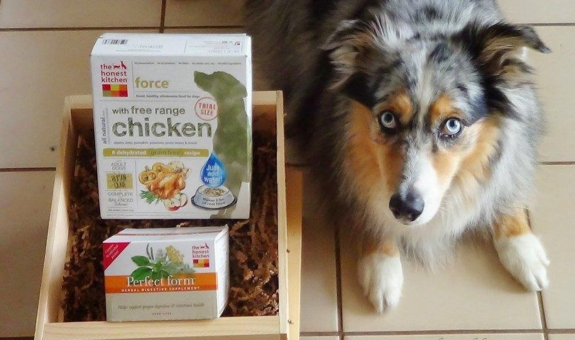Más saludables marcas de alimentos para perros: los 10 primeros en el mercado