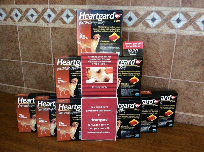 medicina Heartgard