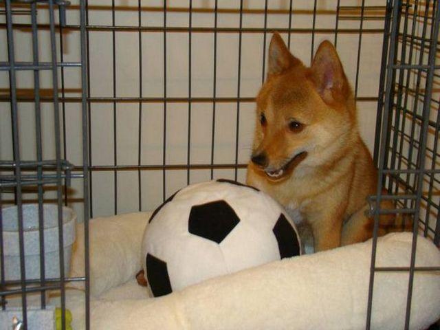 El llanto del perro en CajГіn 2