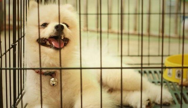 ¡Ayuda! Mi perro está llorando en su jaula! ¿Que debería hacer?