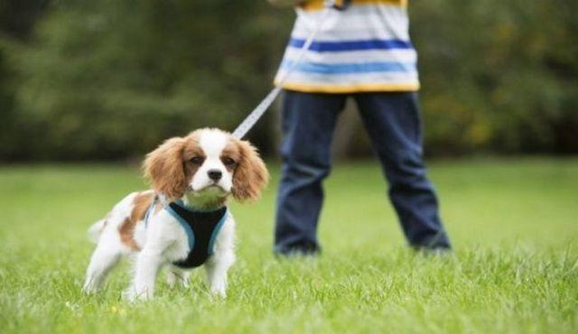 ¡Ayuda! Mi perro tira de la correa en nuestros paseos!