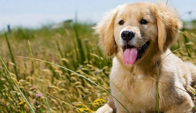 ¡Ayuda! Mi cachorro está respirando rápido! ¿Qué debo hacer?