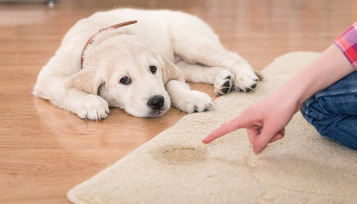 Ayudar a su perro Comunicarse con el Mat Barking