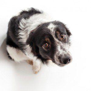 Ayudar a un perro que sufre de ansiedad por separación