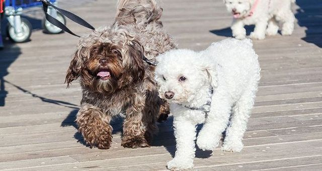 Ayudar a su perro sea social sobre el paseo