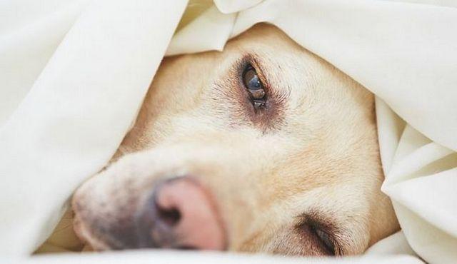 Gastroenteritis hemorrágica en los perros: lo que debe saber